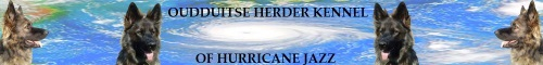 Hurricane Jazz banner